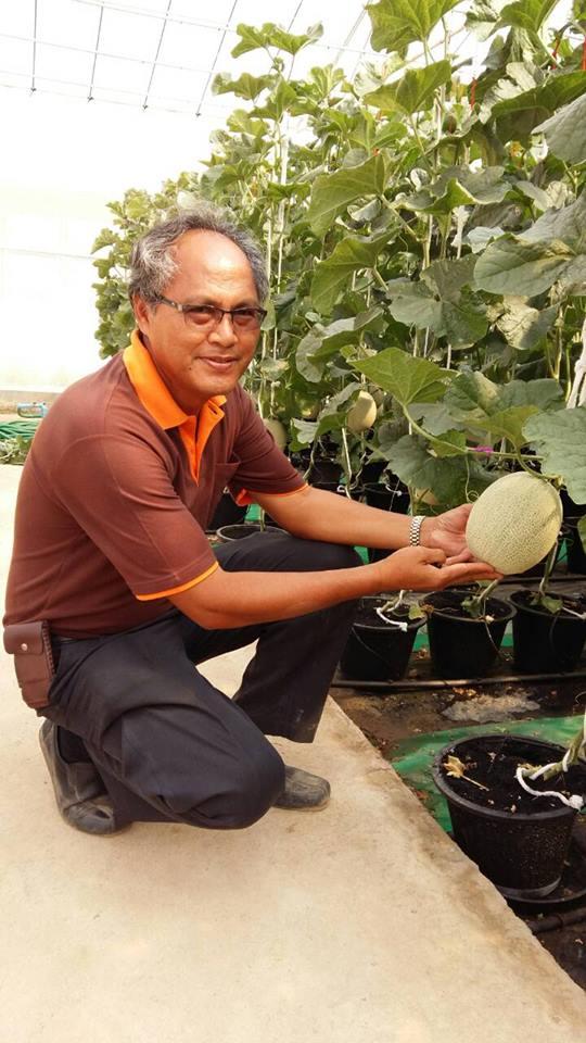 หนุนเกษตรกรปลูกเมล่อนพืชใช้น้ำน้อยราคาดีขายได้ทั้งปี