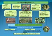 การปลูกและการปฏิบัติดูแลรักษาแตงโม