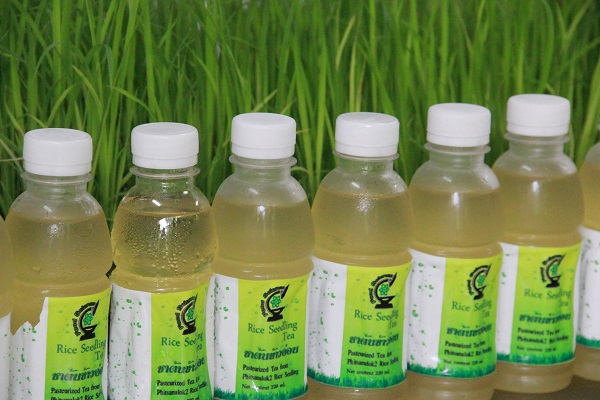 Pasteurized tea product from Phitsanuloke 2 rice seedlings