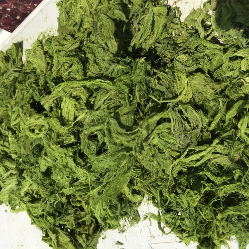 Algae processed product