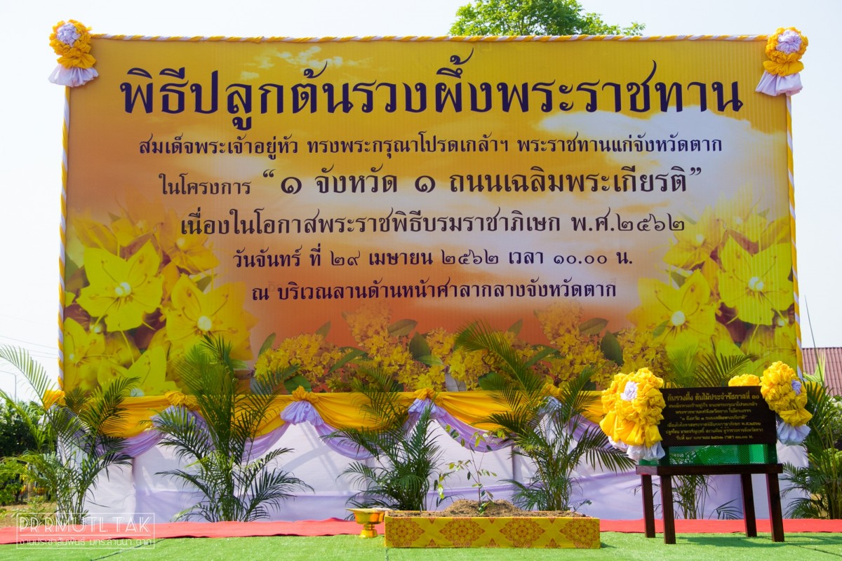 RMUTL Tak Campus planted Yellow Star trees celebrating for the Royal Coronation