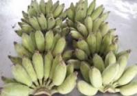 รูปภาพ : การทำแป้งกล้วย
