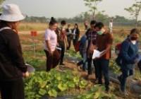 รูปภาพ : โครงการแปลงสาธิตพันธุ์แตงกวาและฟักทอง