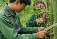 รูปภาพ : ศึกษาดูงาน ณ เฮือนฮังต่อ ของนศ.สาขาพืชฯ