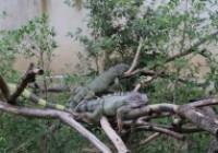 รูปภาพ : สภากาแฟเวียงเจ็ดลิน ณ สวนสัตว์เชียงใหม่