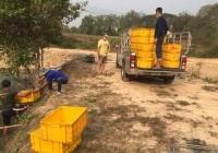 รูปภาพ : ยุวชนอาสา..พาลงชุมชน  การแลกเปลี่ยนเรียนรู้ร่วมกันกับชุมชนด้านการเตรียมอาหารปลากึ่งเปียก