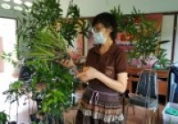 รูปภาพ : อาจารย์คณะวิทย์ฯ มทร.ล้านนา ลำปาง เป็นวิทยากรจัดอบรมขยายพันธุ์พืชและการปลูกพืชสู้โควิด 9กค64
