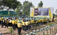 มทร.ล้านนา พิษณุโลก ร่วมโครงการปลูกป่า  เนื่องในโอกาสวันเฉลิมพระชนมพรรษาพระบาทสมเด็จพระเจ้าอยู่หัว  28 กรกฎาคม 2563