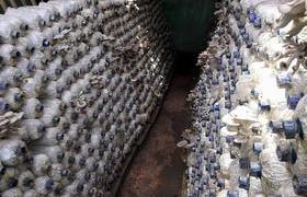 Image : Mushroom Production