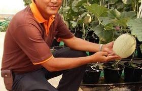 รูปภาพ : หนุนเกษตรกรปลูกเมล่อนพืชใช้น้ำน้อยราคาดีขายได้ทั้งปี
