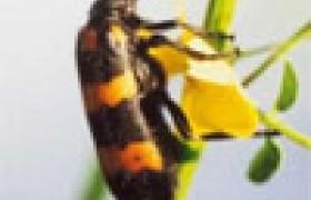 รูปภาพ : พืชกำจัดแมลง