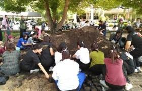 รูปภาพ : นักศึกษาจิตอาสา มทร.ล้านนา ลำปาง พร้อมใจเพาะต้นกล้าดอกดาวเรือง ถวายเป็นพระราชกุศลฯ