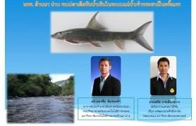 รูปภาพ : มทร. ล้านนา น่าน พบปลาเลียหินน้ำเทินในระบบแม่น้ำเจ้าพระยาเป็นครั้งแรก