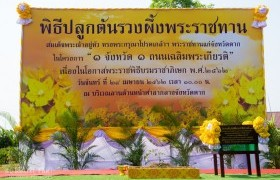 Image : RMUTL Tak Campus planted Yellow Star trees celebrating for the Royal Coronation