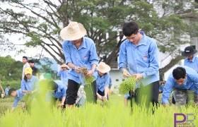รูปภาพ : มทร.ล้านนา ลำปาง จัดกิจกรรม ราชมงคลร่วมใจ ปลูกข้าววันแม่ เก็บเกี่ยววันพ่อ สานต่อวัฒนธรรม ประจำปี 2562