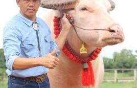 รูปภาพ : ขอแสดงความยินดีกับคุณเอก สอนศิริ ศิษย์เก่าฯรุ่น 49(ปวส.) ที่ได้รับรางวัลเกษตรกรดีเด่น(อาชีพเลี้ยงสัตว์)