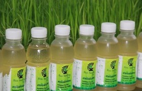 Image : Pasteurized tea product from Phitsanuloke 2 rice seedlings