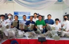รูปภาพ : มทร.ล้านนา ประสบผลสำเร็จ เก็บเกี่ยวผลผลิตกัญชาคุณภาพสูงชุดแรก ส่งมอบกรมการแพทย์แผนไทยฯ ใช้ปรุงยาตำรับไทยและต่อยอดงานวิจัยทางการแพทย์