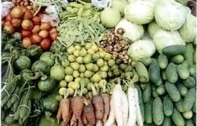รูปภาพ : ปลูกผักช่วงโควิด-19 (ตอน 1)
